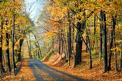 Upper Mud Run Road (MBH Pa) Tags: autumn trees fallleaves tree fall nature colors leaves digital forest canon hearts landscape landscapes woods scenery fallcolor pennsylvania fallcolors loveit fallfoliage explore pa canonrebel soe lehighvalley naturesfinest blueribbonwinner cotcmostfavorited supershot outstandingshots flickrsbest northamptoncounty xti 25faves golddragon mywinners abigfave shieldofexcellence pennsylvaniafallfoliage platinumphoto anawesomeshot aplusphoto flickrbest ultimateshot mudroad flickrbronze diamondclassphotographer flickrdiamond excellentphotographerawards flickrelite yourbestshot theunforgettablepictures thefinalcrown overtheexcellence platinumheartaward fiveflickrfavs betterthangood proudshopper theperfectphotographer top20autumn bestofautumn goldstaraward flickrestrellas exquisiteimage llovemypic overtheexcllence lowermtbethel spiritofphotography showmeyourqualitypixels qualitypixels iwishidtakenthat grouptripod fallfoliageinpennsylvania platinumbestshot