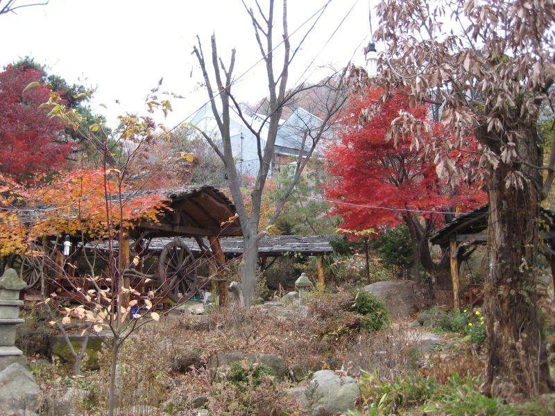 Korea, Visit, Louis, Duck, Lunch 009