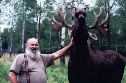 Man Petting Moose