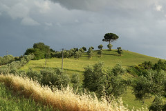 Hill in Toscana (Belenus1414) Tags: italy tree europe cloudy hill tuscany crete siena toscana breathtaking diamondclassphotographer scenicsnotjustlandscapes