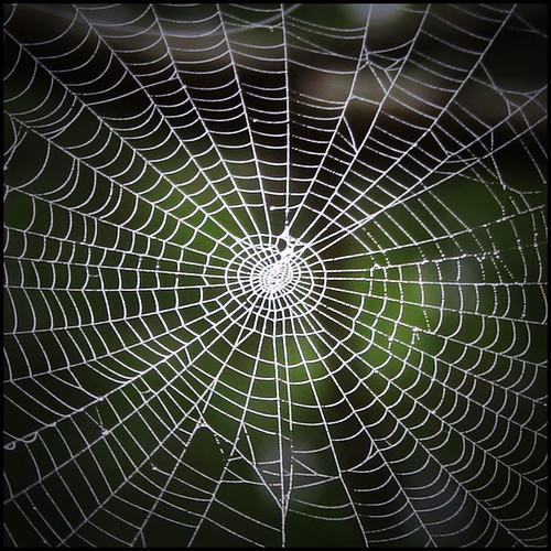 павутина