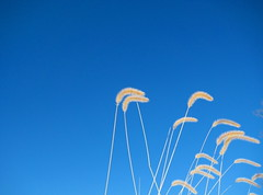 (pondblue) Tags: january zen minimalism  simplepretty blueskyandwindblowing ayoc3
