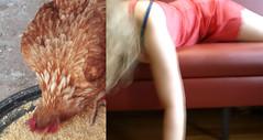 (francescatilio) Tags: donna rosso divano aia gallina pollaio coque sottoveste beccare