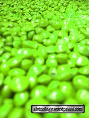 green saga seeds