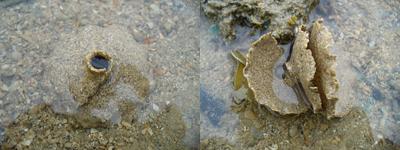 Sandcollar2