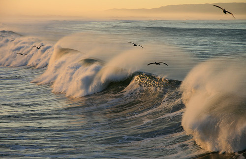 Five Pelicans and Two Waves