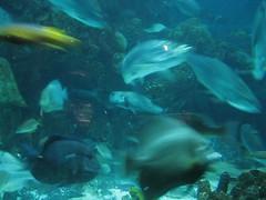 fish aquarium newenglandaquarium