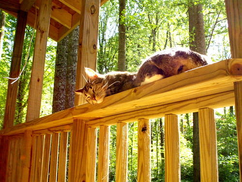 Moxy loves the half-built porch