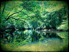 Rhapsody In Green (S.O.NJ.A) Tags: camping summer camp reflection green texture nature water forest photoshop river print photography mirror photo cool connecticut olympus symmetry layer sonja campsite 2007 rhapsody cooling polaris blueribbonwinner supershot iloveyourart mywinners abigfave svete anawesomeshot impressedbeauty sonjasvete mdptree