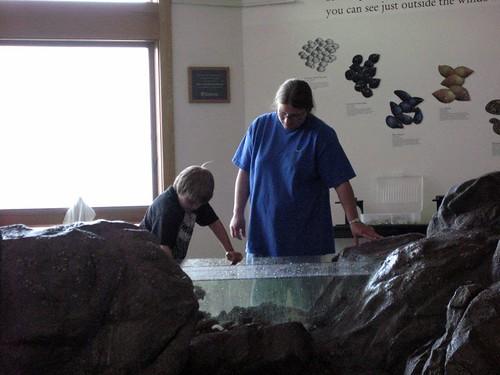 hands on tide pool