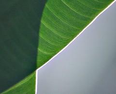 Hour Glass (ebergcanada) Tags: shadow abstract macro green nature leaf fiatlux twtme creattivit unusualviewsperspectives