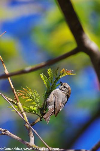 Bird-5960