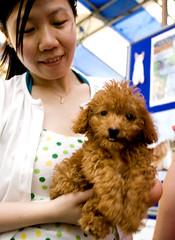 brown puppy!