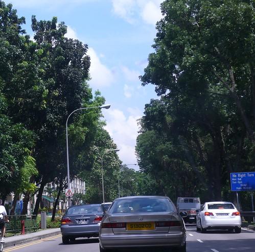 Syzygium_grande-flowers06-bukit_timahr_road.jpg