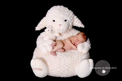 Inspired by the Master! (the portrait place {alecia silva}) Tags: sleeping baby newborn lamb babystyle theportraitplace babysylecom luluchair thankyoushutterblog