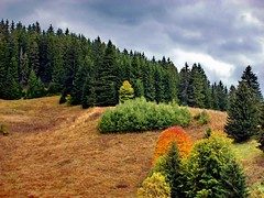 (Emilofero) Tags: sky mountain tree nature colors forest landscape colours bulgaria naturesfinest rodopi progled platinumphoto