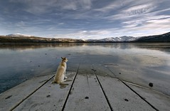 pond(ering) (eyebex) Tags: autumn winter dog mountain snow canada deleteme fall ice k animal by iceage squa
