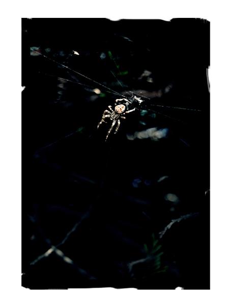 Spider ballet.