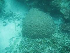 IMG_2345 (dcgreer) Tags: malaysia pulau redang pulauredang