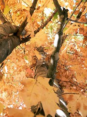 Inspired (Domesticated Diva) Tags: autumn tree fall de tennessee inspired lars inside van picnik fallcreekfalls 2007 aclass goor naturesfinest crossville lookingupward mywinners platinumphoto anawesomeshot ultimateshot diamondclassphotographer flickrdiamond photostosmileabout platinumphotograph betterthangood everydayissunday theperfectphotographer astoundingimage