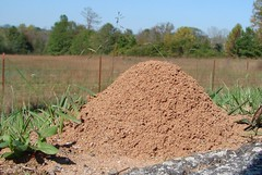 Houston Residents Battling Fire Ants | Pest Control Houston 713-983-PEST