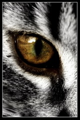 Whose is this eye? (pavel conka) Tags: bw beautiful animal animals digital canon eos eyes raw faces czech natur breathtaking 2007 30d naturesfinest zvata amazingtalent oi megashot colourartaward