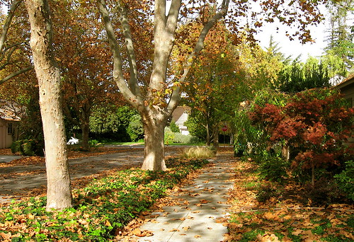 autumn in Old Palo Alto