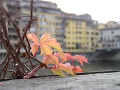 autunno sull'arno