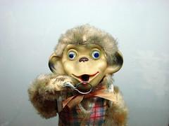 monochito (mujerLiteral) Tags: tourism argentina argentine mouth toy monkey mono weird mujer eyes doll buenos aires ojos bubble mueco boca ml turismo burbuja blueeye juguete literal simpatico bsas raro peluche hears monoloco desorbitado orejotas mujerliteral
