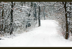 Snowy Road (wishymom (Stephanie Wallace Photography)) Tags: road trees winter snow cold nature weather outdoors woods seasons branches snowing 15challengeswinner photofaceoffwinner pfogold