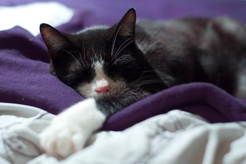 tired Beano 3/3