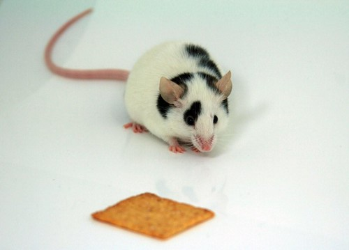 mouse wanna cracker?