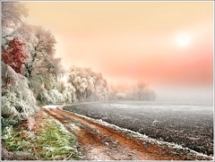 Ice way (Jean-Michel Priaux) Tags: winter sunlight snow france cold tree nature fog landscape alsace soe breathtaking anotherworld portofolio blueribbonwinner ebersmunster specialtouch vision1000 anawesomeshot aplusphoto visiongroup superbmasterpiece francelandscapes theunforgettablepictures fz18 betterthangood goldstaraward vision100