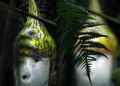 hidden -- fern