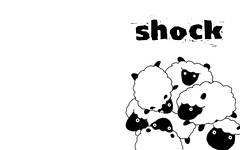 shock  sheep 1280 x 800