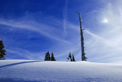 Blue Barren (Gigapic) Tags: blue sky usa tree oregon landscape unitedstates mthood bigmomma interestingness113 photofaceoffwinner pfogold