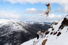 Winter acrobatics (LucaPicciau) Tags: winter sky italy dog chien mountain snow cold cane clouds landscape crazy jump