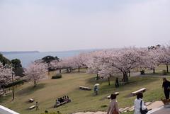 浜名湖SA (by detch*)
