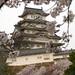 姫路城:姫路城の桜 Cherry blossoms at Himeji Castle