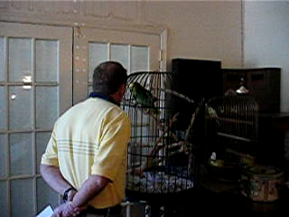 Parrot Saying Asshole Video