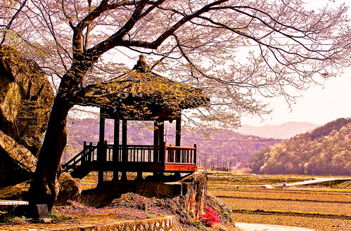 Rural Korea Springtime by LadyExpat.