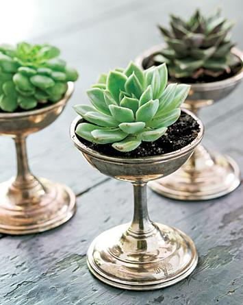 countrylivingsucculent