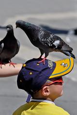 parking ... (pierobosco) Tags: pigeon parking cap piccione ohhh parcheggio berretto