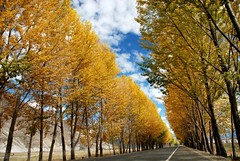 (divya babu) Tags: road autumn yellow tibet fallcolours nikond80 superbmasterpiece