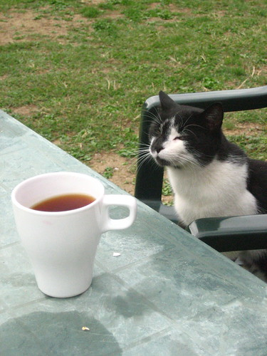 Kitty with a cuppa