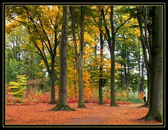Autumn 2007 (Franc Le Blanc .) Tags: autumn trees fall nature forest herfst expressions impressions soe noordbrabant naturesfinest rosmalen supershot anawesomeshot aplusphoto amazingamateur naturewatcher thegoldenmermaid thegardenofzen thegoldendreams