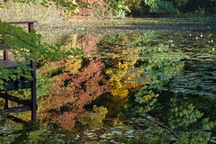It Will Be A Good Day (_Robert C_) Tags: nyc autumn reflection d50 pond bravo yes statenisland tranquil jonanderson highrockpark theladder anawesomeshot colorphotoaward robertcatalano