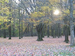 Colonel Crawford Park, Saegertown PA (twitchery) Tags: autumn tree fall nature rural landscape pennsylvania foliage pa meadville potofgold saegertown cotcbestof2006