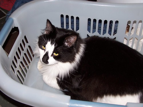 Odo in basket