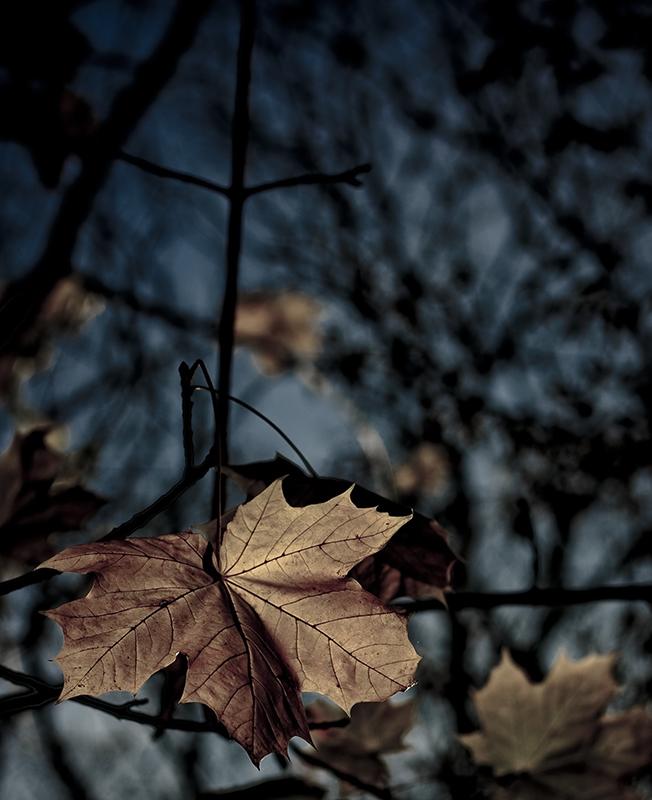 Autumn Texture 1
